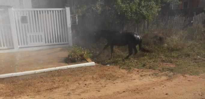 VETERINÁRIO FALA SOBRE OS PERIGOS DE ATAQUES DE ABELHAS EM ANIMAIS DE DIFERENTES PORTES